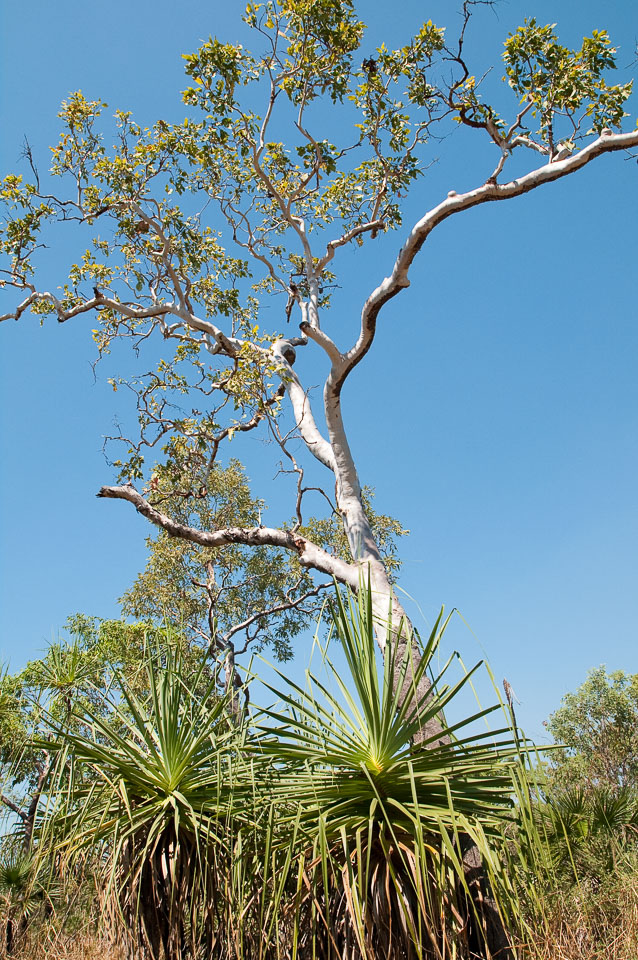 Near magnetic termite mound, Litchfield National Park